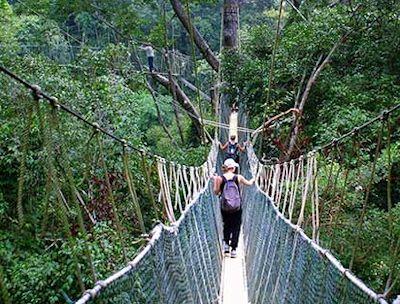 & Nyungwe Canopy Walk Safari Rwanda